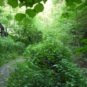 Wald Wettbachklinge SHA