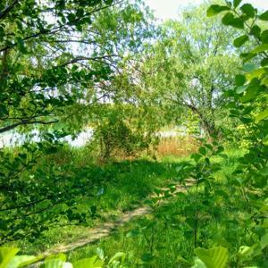 Luthersee bei Stotternheim für FKK und mehr