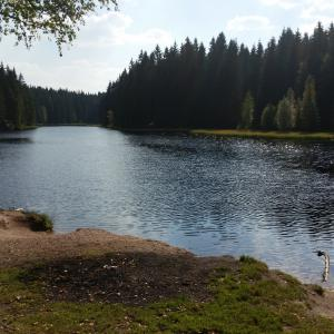 Vogtlandsee Moor/Waldsee